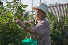 jardinero Fotografía de archivo libre de regalías