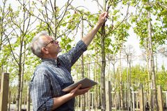 Jardinero adulto que examina las plantas genético de modificación Las manos que sostienen la tableta En los vidrios, una barba, g foto de archivo