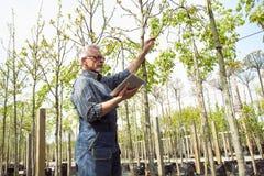 Jardinero adulto que examina las plantas genético de modificación Las manos que sostienen la tableta En los vidrios, una barba, g foto de archivo libre de regalías