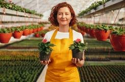 Jardinero alegre con las flores en conserva fotos de archivo libres de regalías
