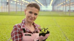 Jardinero alegre que sostiene los potes con lechuga en una granja almacen de metraje de vídeo