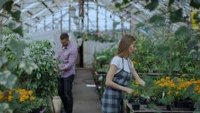 Jardinero amistoso joven de la mujer que habla con el cliente y que le da consejo mientras que trabaja en centro de jardinería metrajes