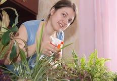 Jardinero con la planta de tiesto de florecimiento. Imágenes de archivo libres de regalías