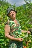 Jardinero con los pepinos 2 fotos de archivo