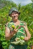 Jardinero con los pepinos 5 fotos de archivo libres de regalías