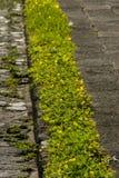 Jardinero de la calle de la acera en Guatemala, América cetral fotos de archivo libres de regalías