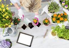 Jardinero de la mujer que planta las flores y que usa la tableta Fotografía de archivo