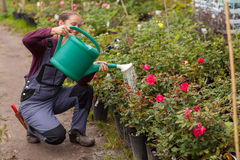Jardinero de la mujer que riega las flores en el jardín Fotos de archivo libres de regalías