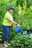 Jardinero de la mujer que riega las plantas Fotos de archivo