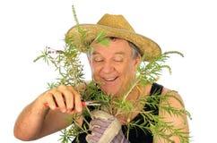 Jardinero de la poda Fotografía de archivo