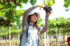 Jardinero de las uvas Foto de archivo libre de regalías