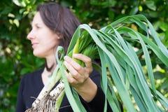 Jardinero de sexo femenino que lleva a cabo la cosecha de puerros orgánicos fangosos, mirando imágenes de archivo libres de regalías