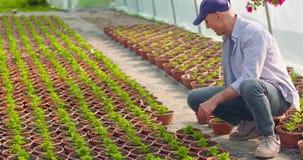 Jardinero de sexo masculino confiado de la agricultura que examina la planta en conserva de la flor metrajes