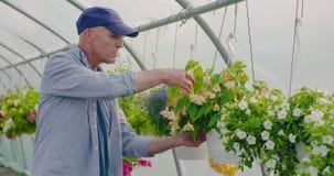 Jardinero de sexo masculino confiado de la agricultura que examina la planta en conserva de la flor almacen de video