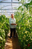 Jardinero de sexo masculino maduro que trabaja en jardín del invernadero Imagenes de archivo