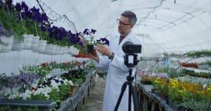 Jardinero de sexo masculino que presenta la planta a la cámara metrajes