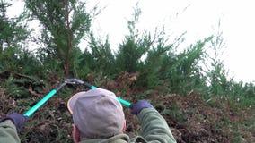 Jardinero del hombre que hace el trabajo de mantenimiento, poda la cerca viva almacen de video