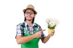 Jardinero divertido joven con el pote de camomiles Imagenes de archivo