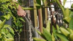 Jardinero - el granjero está irrigando el suelo/la cosecha/la horticultura/la agricultura metrajes