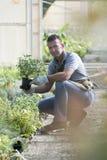 Jardinero en el trabajo Fotografía de archivo libre de regalías