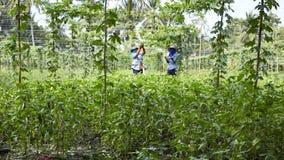 Jardinero en Tailandia Foto de archivo libre de regalías