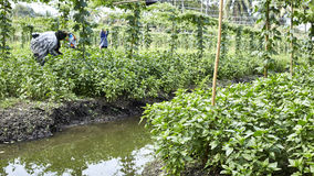 Jardinero en Tailandia Fotos de archivo