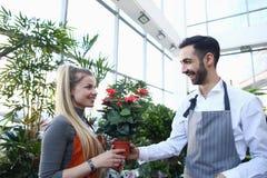Jardinero Giving Red Flower del hombre en pote a la mujer fotos de archivo libres de regalías