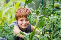 Jardinero joven Fotografía de archivo