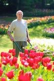 Jardinero mayor en el trabajo Foto de archivo libre de regalías