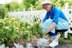 Jardinero mayor Planting Flowers fotos de archivo