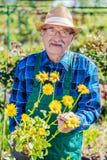 Jardinero mayor que muestra una flor en conserva imagen de archivo
