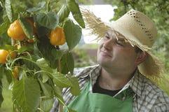 Jardinero: orgulloso fotografía de archivo