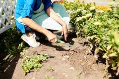 Jardinero Planting Flowers Closeup imagen de archivo libre de regalías