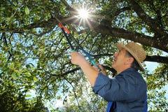 Jardinero que hace un corte del árbol Imagen de archivo libre de regalías