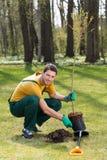 Jardinero que planta el árbol joven foto de archivo libre de regalías