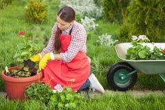 Jardinero que planta las flores en pote Imágenes de archivo libres de regalías
