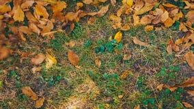 Jardinero que rastrilla la cantidad otoñal caida del estorbo de las hojas UHD 4K metrajes