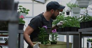 Jardinero que selecciona las flores del pote en invernadero
