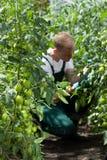 Jardinero que trabaja en invernadero Fotos de archivo libres de regalías
