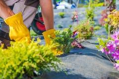 Jardinero Spring Planting fotos de archivo libres de regalías
