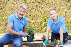 Jardineros de paisaje que plantan en cama de flor Fotografía de archivo