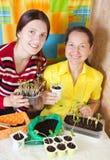 Jardineros de sexo femenino con la planta de semillero Foto de archivo