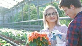 Jardineros de sexo masculino y de sexo femenino que comprueban y que rocían macetas en gardenhouse metrajes