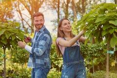 Jardineros que cortan las hojas de las plantas Fotos de archivo libres de regalías