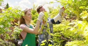 Jardineros que cortan las hojas y las ramas metrajes