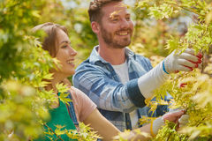 Jardineros que cortan las hojas y las ramas Imágenes de archivo libres de regalías