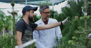 Jardineros que examinan el árbol de pino metrajes