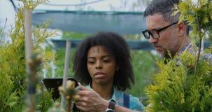 Jardineros que examinan el thuja en jardín del cuarto de niños almacen de video