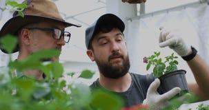 Jardineros que toman la foto de la planta de tiesto