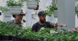 Jardineros que toman la foto de la planta de tiesto almacen de metraje de vídeo